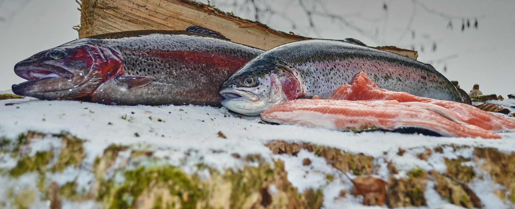 Čerstvé ryby zo Stupavského rybárstva!